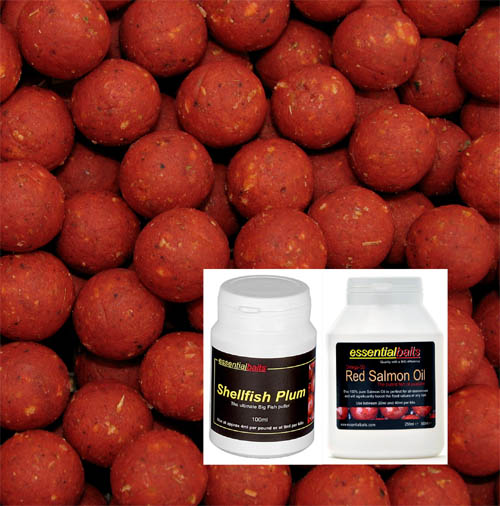 Shellfish B5 Hard Hookbait Pack